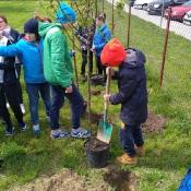 Sadzimy drzewka_3
