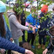Sadzimy drzewka_6