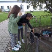 Martyna i Natalia z 5c w schronisku dla zwierząt (23.09.2017)