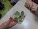 Niezwykłe rośliny i zwierzęta. Warsztaty UNIKIDS w klasach 5 (10.11.2015)