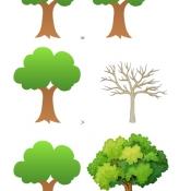 Drzewka_1
