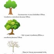 Drzewka_2
