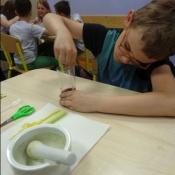 Co potrafią rośliny? - warsztaty w klasie IVA