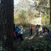 Klasy 3 w lesie_14