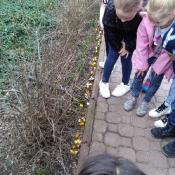 Obserwujemy wiosenną przyrodę_2