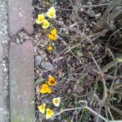 Obserwujemy wiosenną przyrodę_4