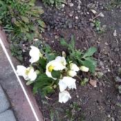 Na tropie wiosny_6
