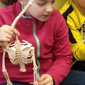 Lekcja anatomii_11