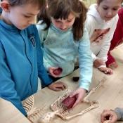 Lekcja anatomii_13