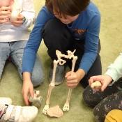 Lekcja anatomii w 2c (4.03.2020)