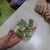 Niezwykłe rośliny i zwierzęta. Warsztaty UNIKIDS w klasach 5 (10.11.2015)_15