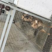 Pomagamy bezdomnym zwierzętom (23.02.2019)