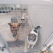 Pomagamy bezdomnym zwierzętom (23.10.2019)