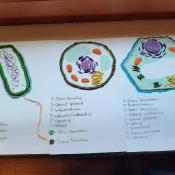 Trochę plastyki na lekcjach biologii (9.11.2020)