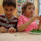 Warsztaty kulinarno-przyrodnicze w klasach 1 (7.11.2015)