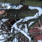 Zimowy festiwal - stołówki dla zwierząt (6.02.2021)