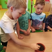 Żabki i projekt DRZEWO_17