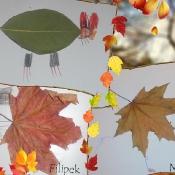 Żabki poznają tajemnice jesiennych liści