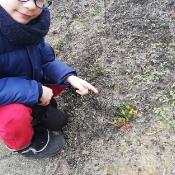 Żabki szukają wiosny