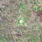 Żabki szukają wiosny_7