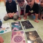 Żabki uczą się jak unikać wirusów i bakterii_2