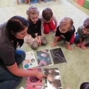 Żabki uczą się jak unikać wirusów i bakterii_3