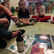 Żabki uczą się jak unikać wirusów i bakterii_4