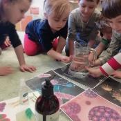 Żabki uczą się jak unikać wirusów i bakterii_5