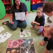 Żabki uczą się jak unikać wirusów i bakterii_6