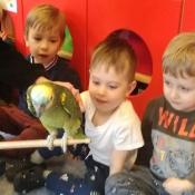 Ferie z papugą Figo