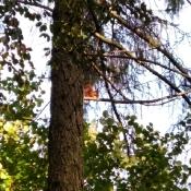 Jesienny space Motylków i Pszczółek_5