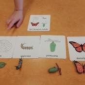Motylki o motylach – projekt edukacyjny
