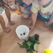 Motylki pomagają kwiatkowi_2