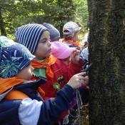 Rybki i Smoki szukają jesieni_6