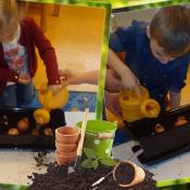 Rybki sadzą cebulę