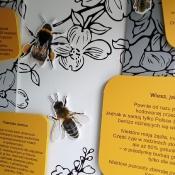 Misie poznają tajemnice pszczelarstwa_11