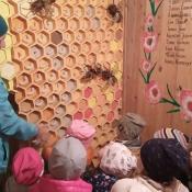 Misie poznają tajemnice pszczelarstwa_18