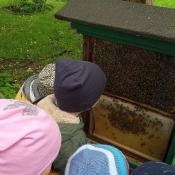 Misie poznają tajemnice pszczelarstwa