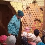 Misie poznają tajemnice pszczelarstwa_7