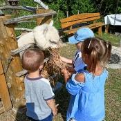 Przedszkolaki i alpaki