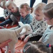 Spotkanie z owieczką Metką