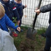 Zasadziliśmy drzewka!:)