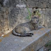 Wspomnienie z wakacji Toskania 2018_15